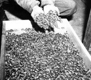 Wedding rings of Holocaust victims…